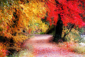 Autum Path II by William Carroll